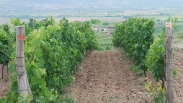 Bulgaria_Wine_Tours_-